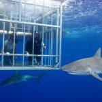 Shark Week Mark Cuban 2018