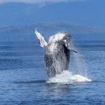 animal-nature-ocean-51964