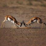 aquila-game-reserve-wildlife
