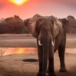 beautiful-dawn-elephant-1054655