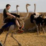 ostrich-riding-icon-350-x-300_160eecc3414209c6802c9962470e6f52