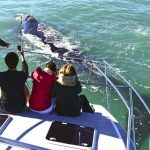 s-town-boat-company-whale-watching